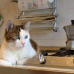*daniganz* [a perfect Italian cat…]