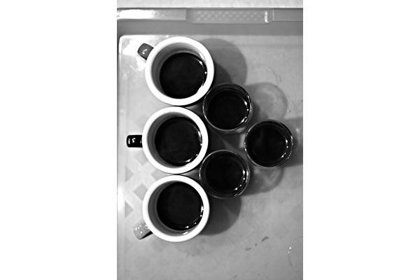 stefigno [ L'albero del caffe ]