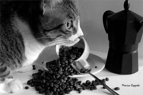 Monica Cappato [ coffee break ]