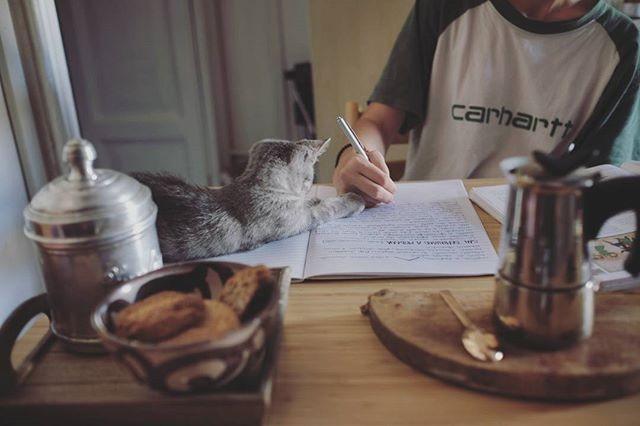 """""""Sarà mica possibile studiare così? ( #📷 @mayastarlavi )"""